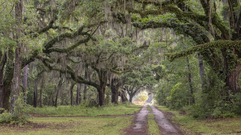 Trees, gravel road, landscape photography, dirt roads, lowcountry photography
