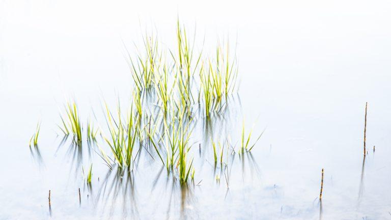 marsh grass, high key, zen, fine art,green