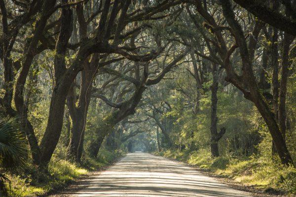 trees, botany bay, edisto, gravel roads, live oaks