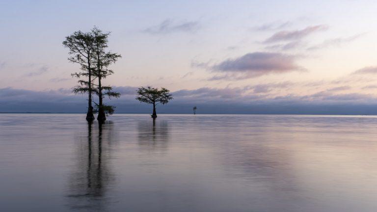 cypress trees, long exposure, lowcountry, lake, sunrise, trees