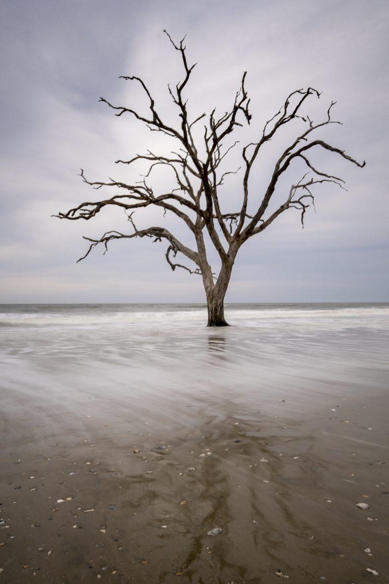 boneyard trees, treses, edisto island, botany bay, sunset, ocean, long exposure